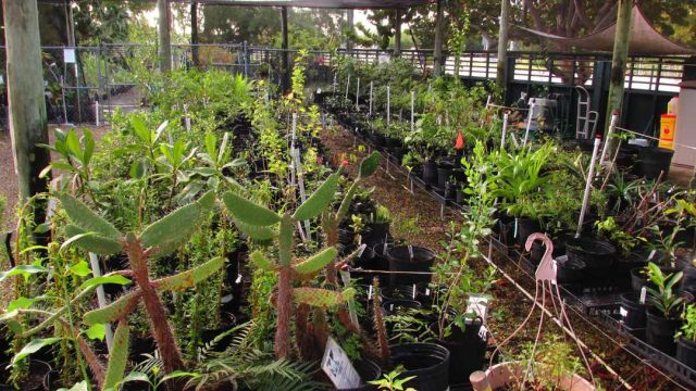 Visit the Garden | Key West Tropical Forest & Botanical Garden